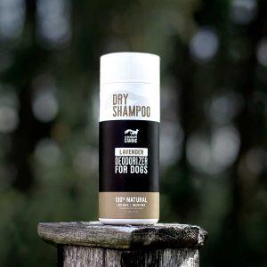 Dry-Shampoo3
